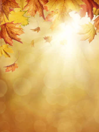 fall leaves: Autumn leaves on colorful background Stock Photo