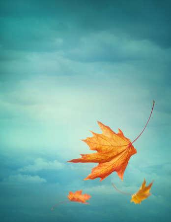 青い背景の秋の落ち葉