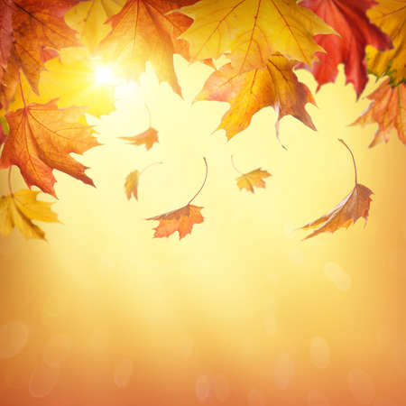 october: Autumn falling leaves on colorful background Stock Photo