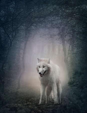 lobo feroz: Lobo blanco en el bosque de la noche Foto de archivo