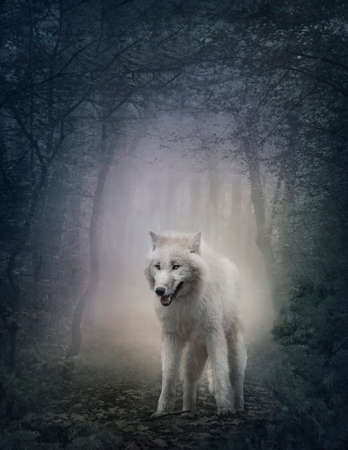 fantasy: White wolf in the night forest