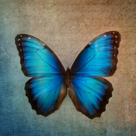 Vintage background with blue butterfly Stock Photo - 22929466
