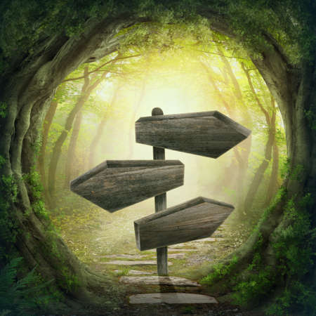enchanted: Wooden arrows road sign in the magic dark forest Stock Photo