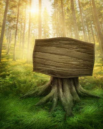 luz do sol: Sinal de madeira na floresta escura magia