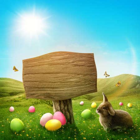 lapin: Panneau en bois dans la prairie au printemps magique