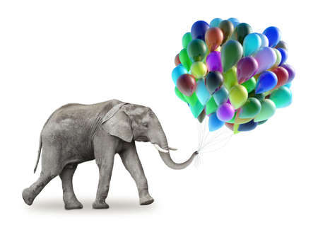 Elephant with a colorful balloons isolate on a white background photo