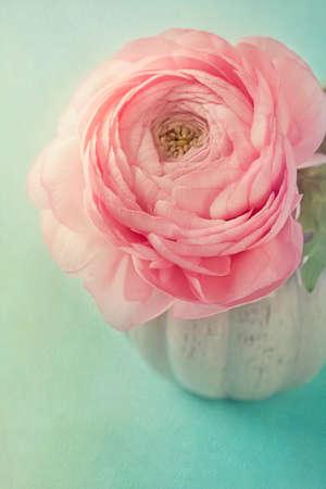 ranunculus: Pink ranunculus in a vase