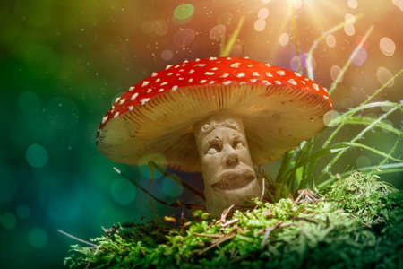 Fantasy mushroom in the forest Stock Photo