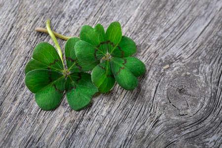 four fourleaf: Four leaf clover on grey wooden background