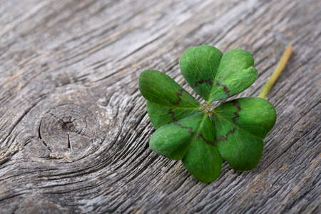 irish symbols: Four leaf clover on grey wooden background