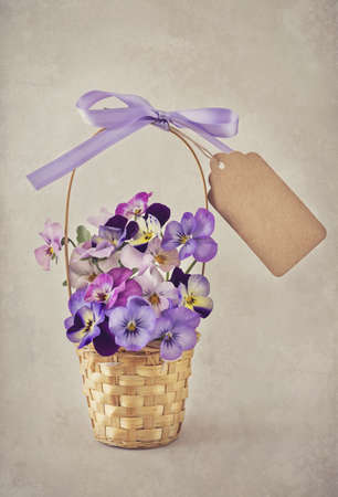 Viola flowers in a basket Stock Photo