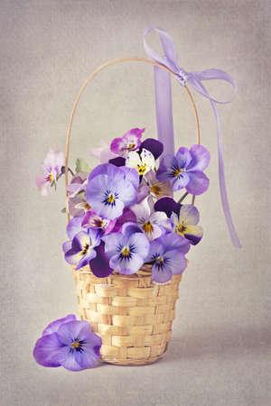 paper basket: Viola flowers in a basket Stock Photo