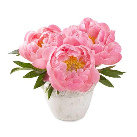 peony: Peony flowers in a white vase