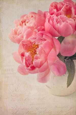 oil color: Peony flowers in a white vase
