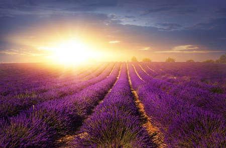 Lavender pole při západu slunce, Provence Reklamní fotografie