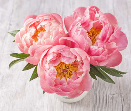 flower painting: Peony flowers in a white vase