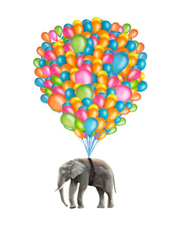 surrealism: Flying elephant with colorful balloons isolated