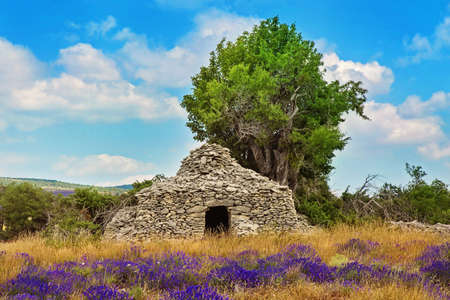 herbs of provence: Stone borie in the lavender field Stock Photo