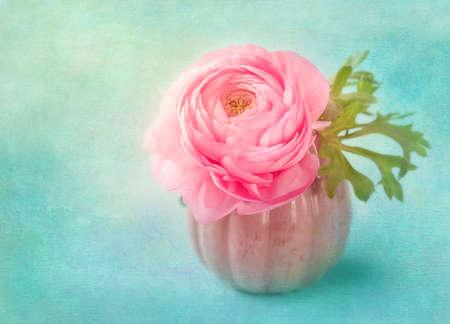 Rosa Hahnenfuß Blume in einer Vase