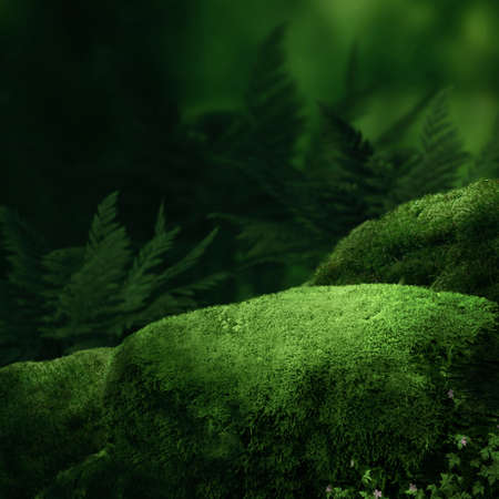 moss: Dark magic forest with big moss stones