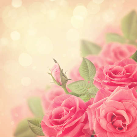 red rose bokeh: Pink roses on a bokeh background Stock Photo