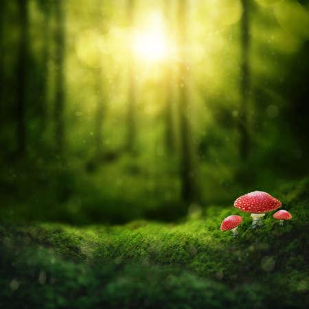Donker magisch bos en zonneschijn Stockfoto
