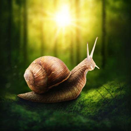 Snail in a dark forest