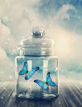 Two butterflies closed in a jar