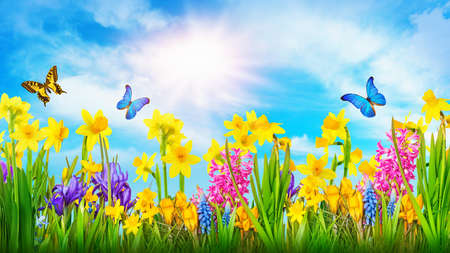 Colorful flowers and two butterflies Stock Photo