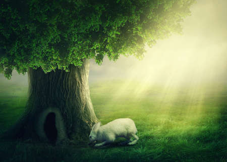 White rabbit and a tree with the hole Stock Photo