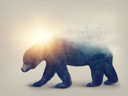 Double exposure with a bear and forest
