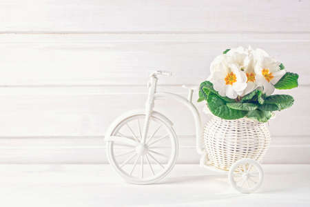 White spring flowers in a bicycle vase