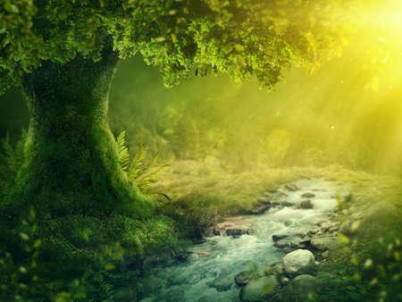 太陽の光を浴びた深い魔法の森 写真素材 - 105686145