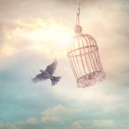 Bird escaping from the cage. Concept image.