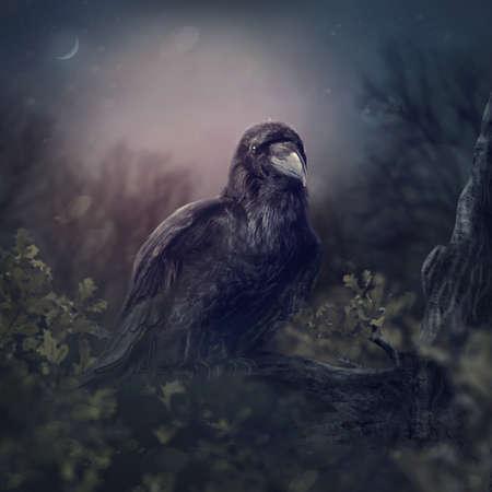 Black raven in the night Standard-Bild