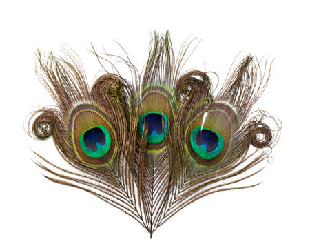 Peacock feathers isolated on white background Standard-Bild