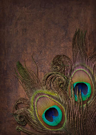 Abstract backgound with peacock feathers. Close up.
