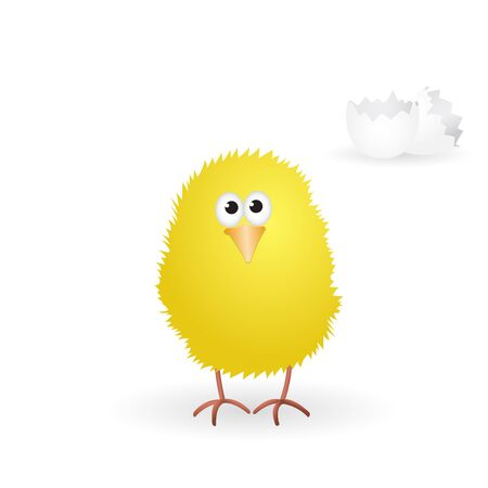 hatched: Little yellow chick just hatched from the egg. Vector illustration. Illustration