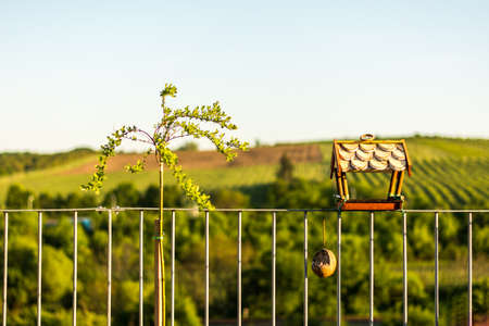 sunflower seeds: Bird feeder with green nature background and tree placed on railing