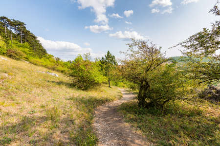 pas: Path near the fields, agricultue, trees and bushes. Summer weather and blue sky. Stock Photo