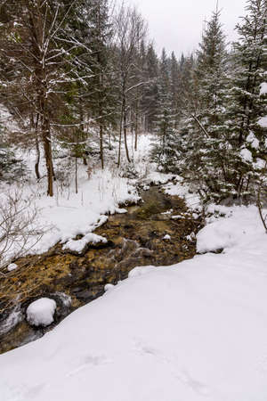 path in the forest, snow and winter Stock Photo