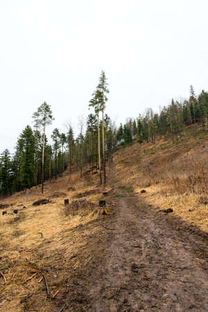The mud road on the hill in forest. Way for adventure tourist Foto de archivo