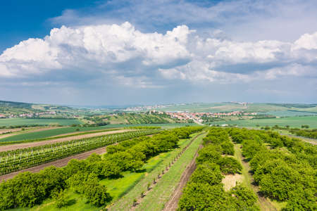South Moravia, Czech republic: Vineyard fields on agriculture land. Countryside meadow, vineyard plant and beautiful landscape near small village. Summer and blue sky with nice clouds Stok Fotoğraf