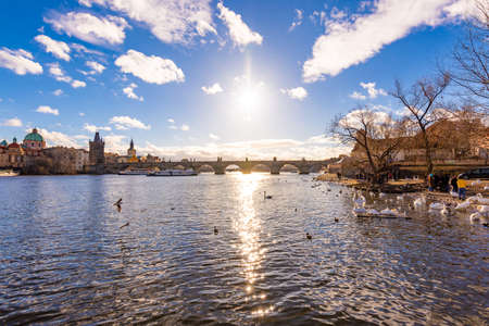 Panoramatic view of Prague Charles bridge near the Vltava river. Swan on the river. Prague is czech capital and important tourist destination