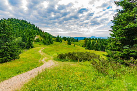 View of Mala Fatra, Slovakia national park. Tourist path near the Maly and Velky rozsutec mountains. Beautiful forest, trees and grass. Vibrant color in fresh nature. 版權商用圖片 - 128483248