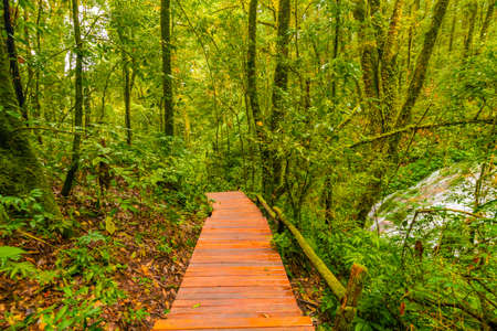 Wooden tourist path at Doi Inthanon national park, Thailand. Beautiful place in tropical rainforest with fresh green plants after rain with big humidity and fog in far. Chiang Mai province.
