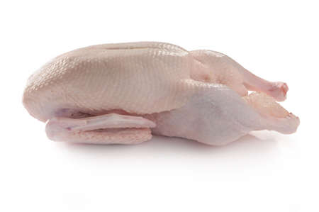 ready to cook duck photographed in the studio with white background photo