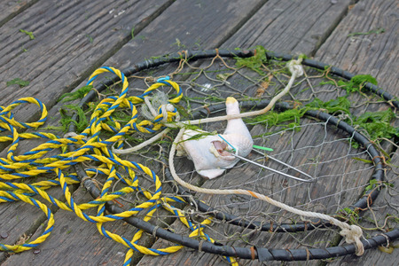 baited: Baited Crab Trap on a Fishing Dock Stock Photo