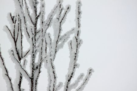shiver: Frosty Tree Branches Stock Photo