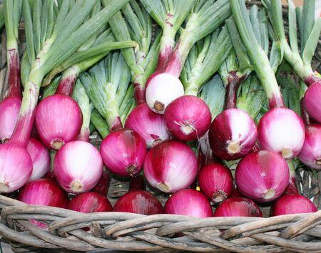 cebollas: Cesta de fresco y recogido cebollas rojas en el Mercado de Agricultores Foto de archivo